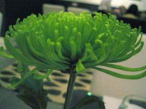 petflower