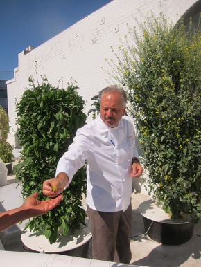 Chef John Sedlar showing his rooftop garden